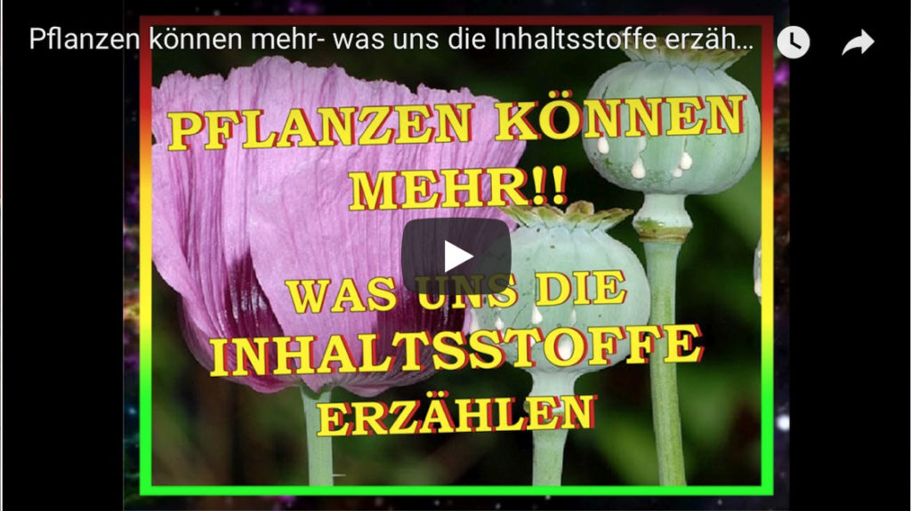 Video_Screen_PflanzenKoennenMehr