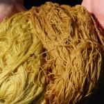 Färbung mit Schafgarbe