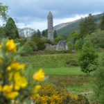 Ginsterblüten in Glendalough