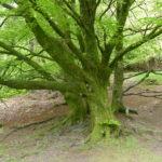 Energiegeladener Baum