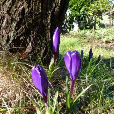 Der Frühling steht nun doch vor der Tür…